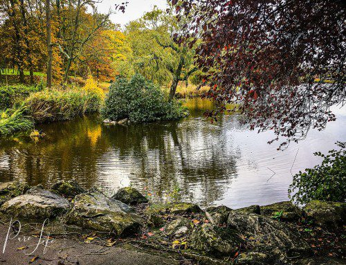 Photo shoot Location – Ponds of Woluwe (Park of Woluwe)